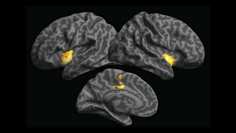 Sensory information underpins abstract knowledge