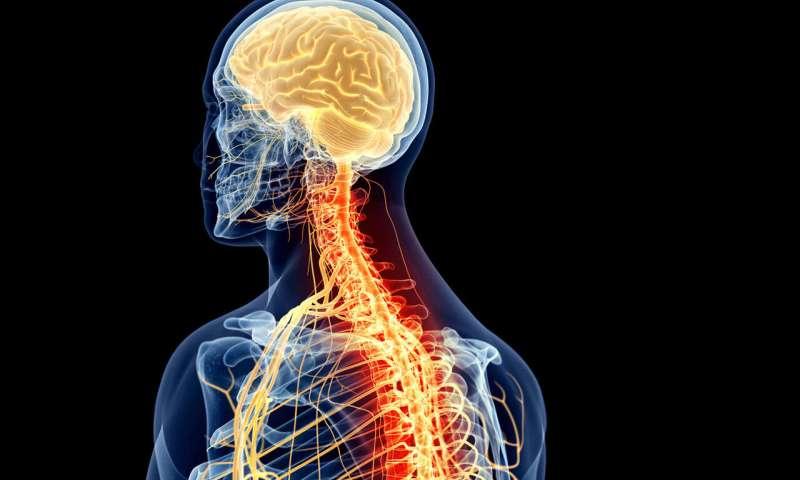 Serotonin is a master regulator of neuroregeneration