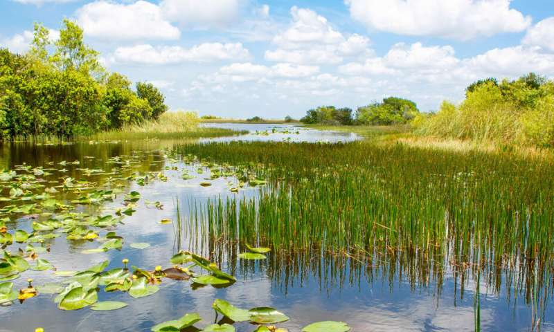 Signs of fires, hurricanes, other disruptions linger in the Florida Everglades for years