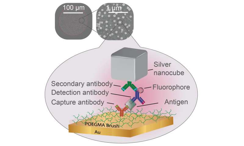 Silver nanocubes make point-of-care diagnostics easier to read