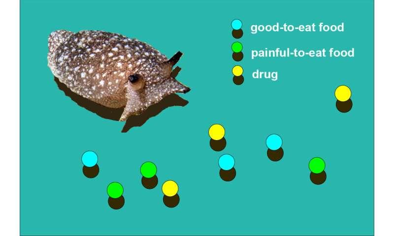 Simulated sea slug gets addicted to drug