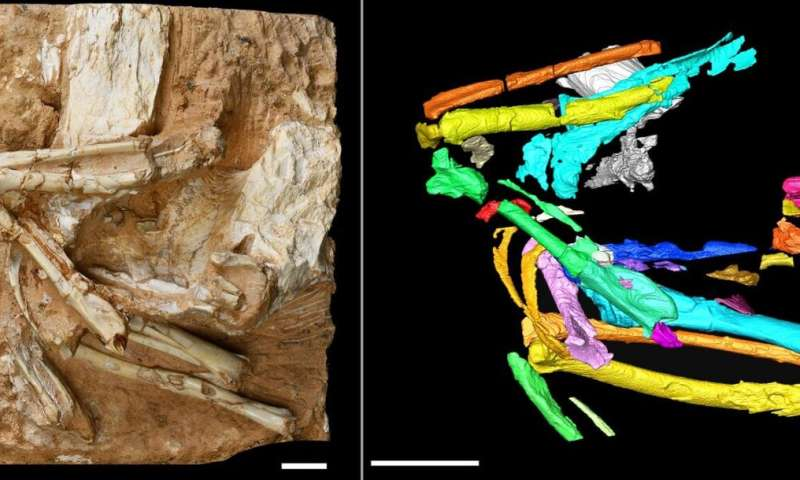 Six million-year-old bird skeleton points to arid past of Tibetan plateau