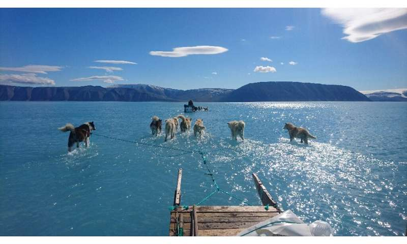 Sled dogs wading through standing water on the sea ice in northwestern Greenland, in June 2019