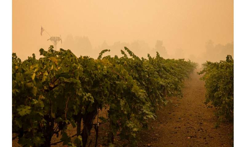 Smoke rose from scorched ground beside vineyards and soot-blackened wineries in Napa Valley