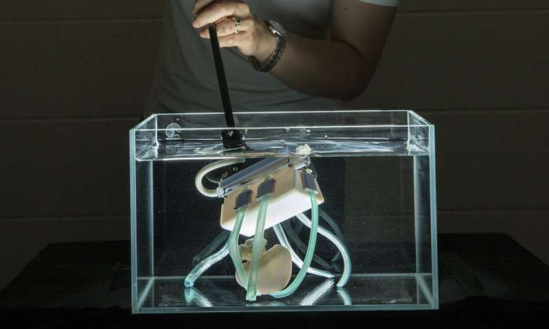 Soft robot fingers gently grasp deep-sea jellyfish