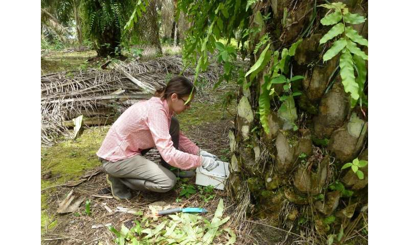 Soil life thrives between oil palm fronds