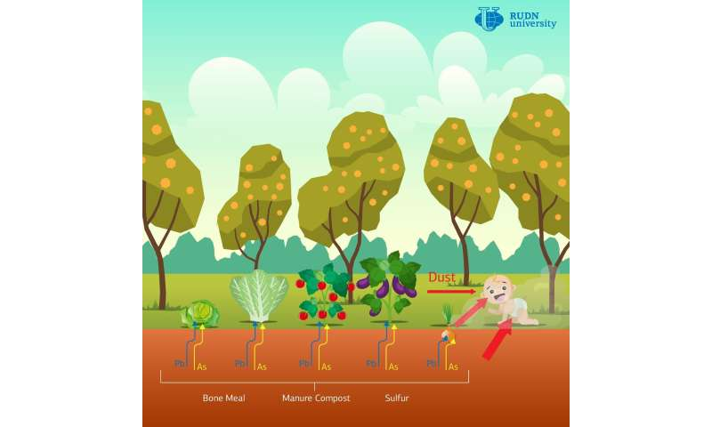 Soil Scientists from RUDN University Suggested a Method for Remediating Urban Garden Soils Contaminated with Lead and Ar