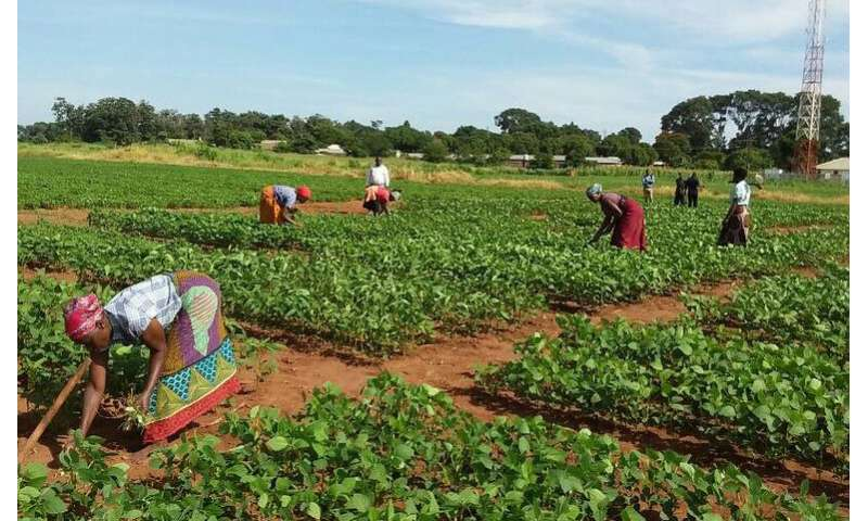 Soybean Innovation Lab provides knowledge that assists soybean production in Africa