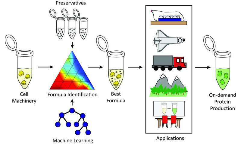 Stabilizing freeze-dried cellular machinery unlocks cell-free biotechnology