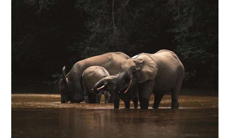 Stirling experts lead research into impact of climate change on rainforest elephants