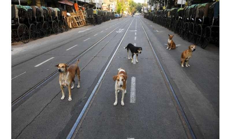 Бродячие собаки в Калькутте обычно полагаются на объедки и отказываются от пищи, но голодают во время блокировки коронавируса