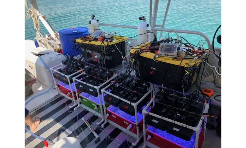 Stress testing 'coral in a box'