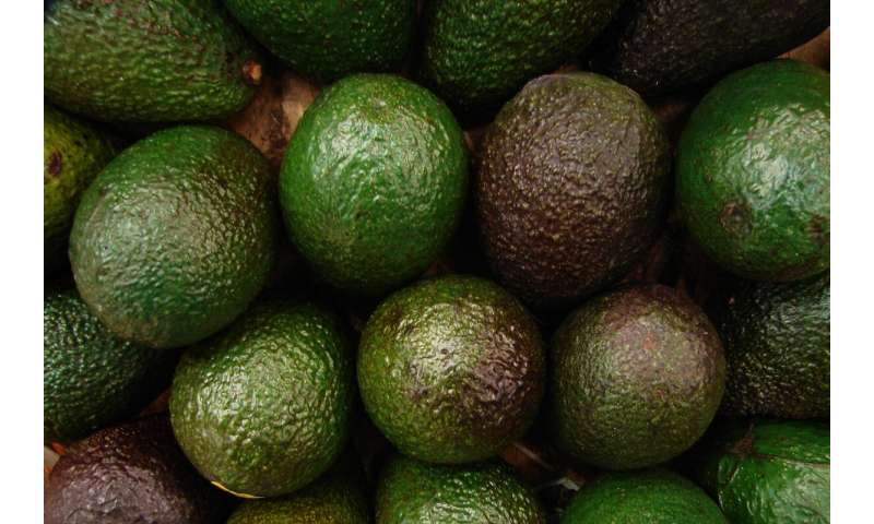 Student-developed device predicts avocado ripeness