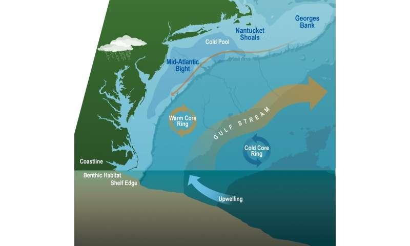 Studies investigate marine heatwaves, shifting ocean currents