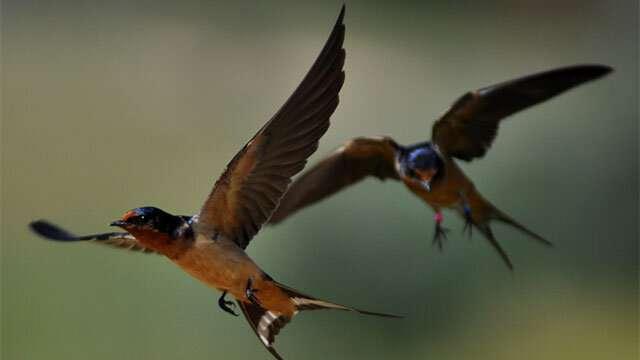 Study finds bird evolution shaped by Tibetan Plateau