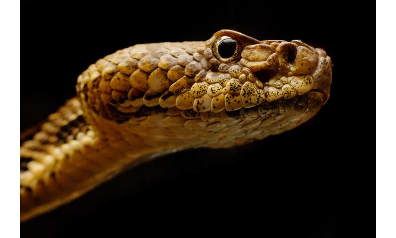 Study finds fungal disease of snakes in 19 states, Puerto Rico