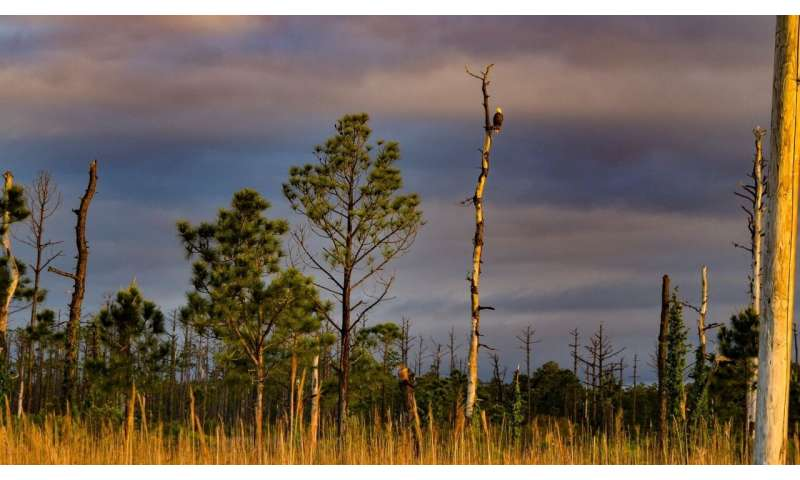 Study finds spreading ghost forests on NC coast may contribute to climate change