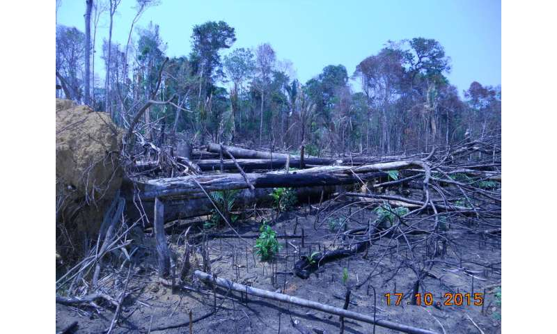 Study links malaria risk in deforestation hotspots to demand for agricultural commodities
