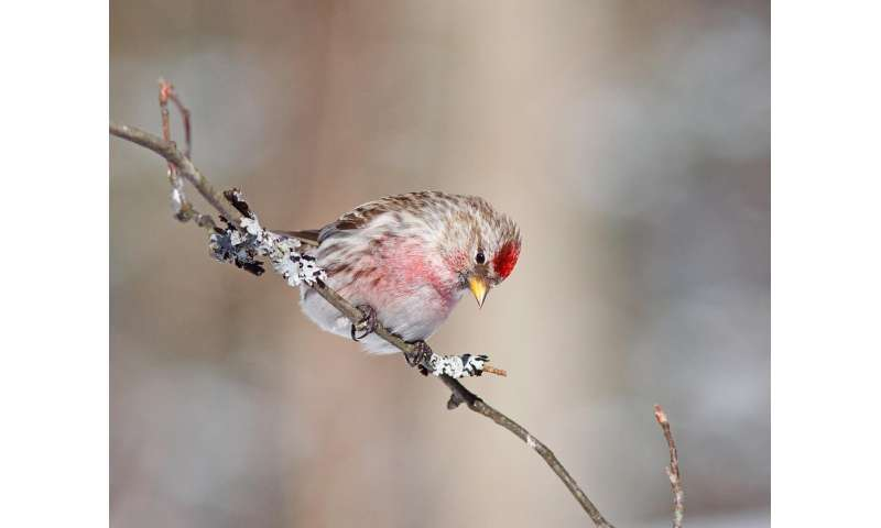 Study: Most migratory birds rely on a greening world