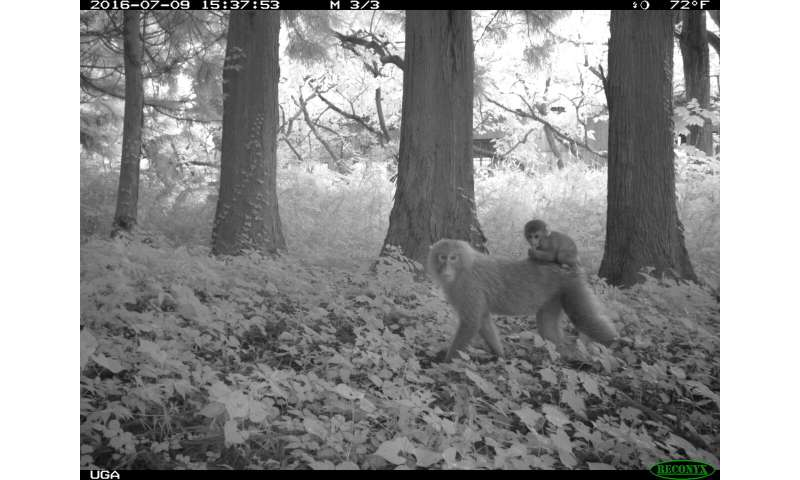 Study shows animal life thriving around Fukushima