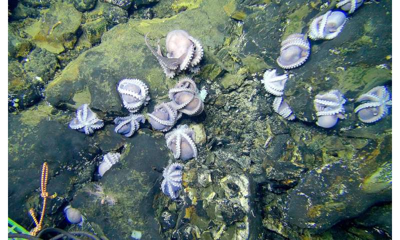 Study weighs deep-sea mining's impact on microbes