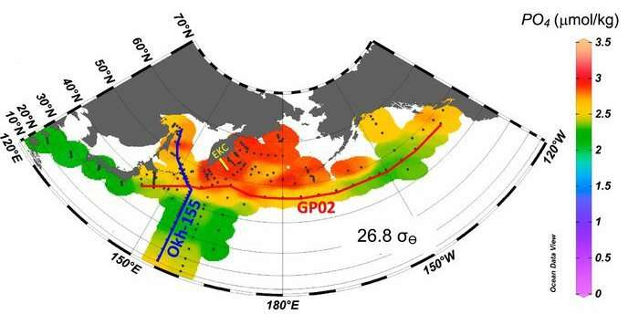 Subpolar marginal seas play a key role in making the subarctic Pacific nutrient-rich