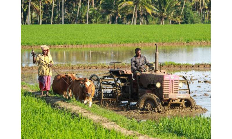 Subsidies, weather, and financial education promote agricultural insurance adoption