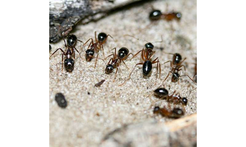 Sugar ants' preference for pee may reduce greenhouse gas emissions
