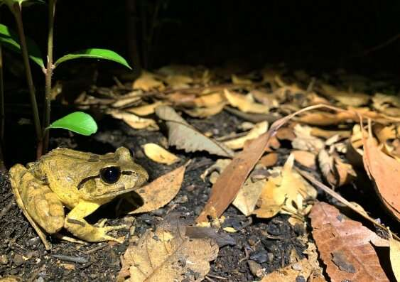 Surviving the flames: citizen scientists reveal frogs' initial response to 'black summer' bushfires