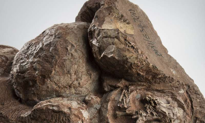 Synchrotron X-ray sheds light on some of the world's oldest dinosaur eggs