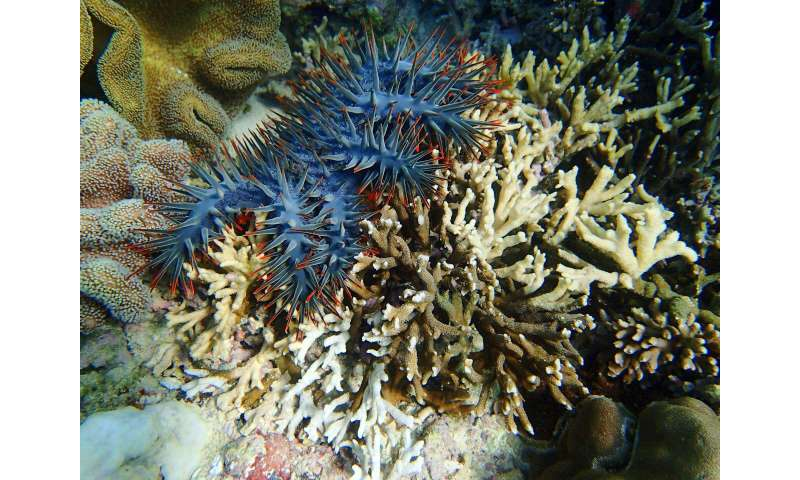 Tackling coral reefs' thorny problem