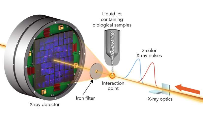 Testing how accurately X-ray lasers can measure the inner workings of biological molecules