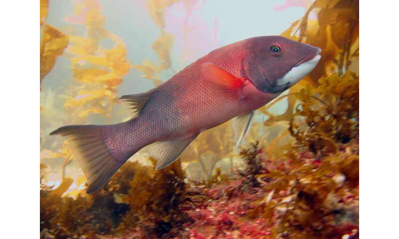 The advantage of changing sex in fish population recovery