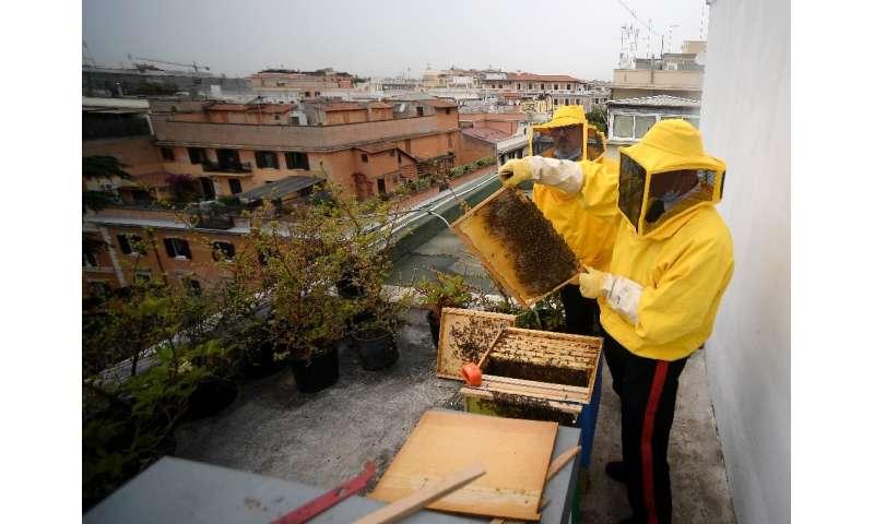 El proyecto de estudio de abejas incluye a otros 30 grupos en la capital de Italia que comparten información sobre sus abejas.