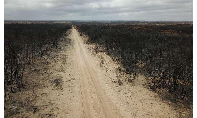 The bushfires have left large areas of Australia burnt through