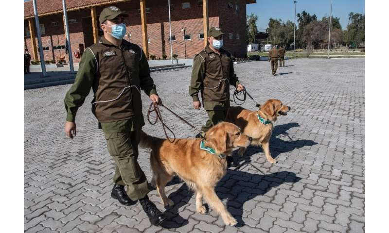 The canine trainees began their education one month ago, and will use sweat samples taken from COVID-19 patients being treated a