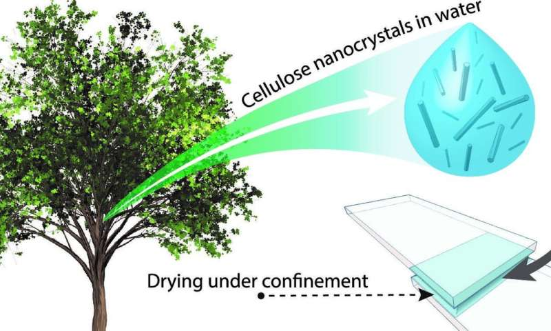 The combination of plant-based particles and water forms an 'eco' super-glue