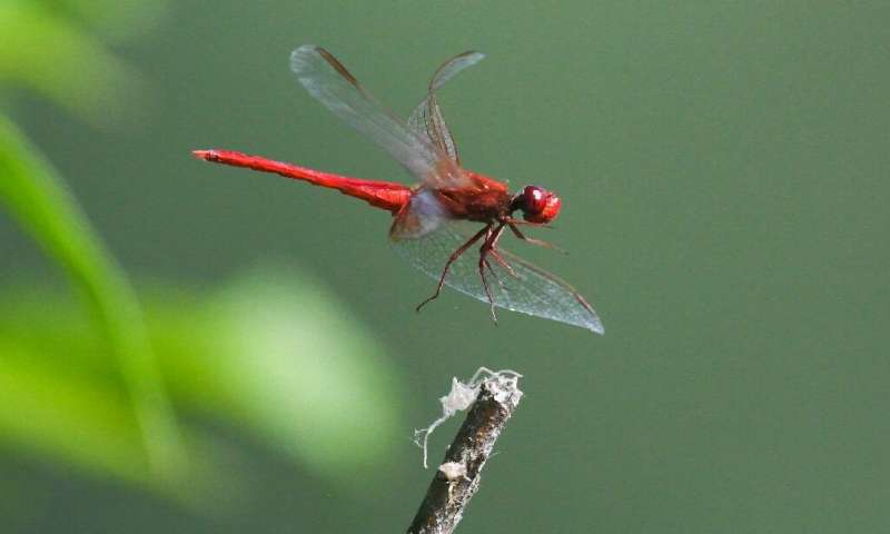 The disappearance of bugs that fly, crawl, burrow, jump and walk on water is part of a gathering mass extinction event