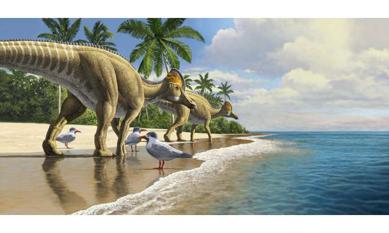 The first duckbill dinosaur fossil from Africa hints at how dinosaurs once crossed oceans