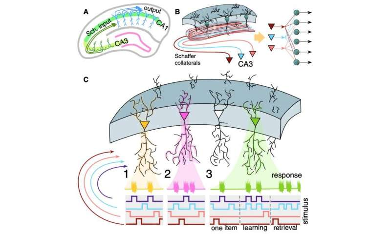 The first model proposed to simulate the functioning of concept cells in the brain