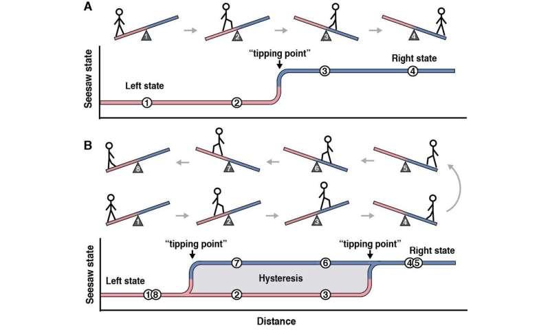 The hidden math of bacterial behavior