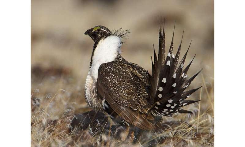 The impact of energy development on bird populations