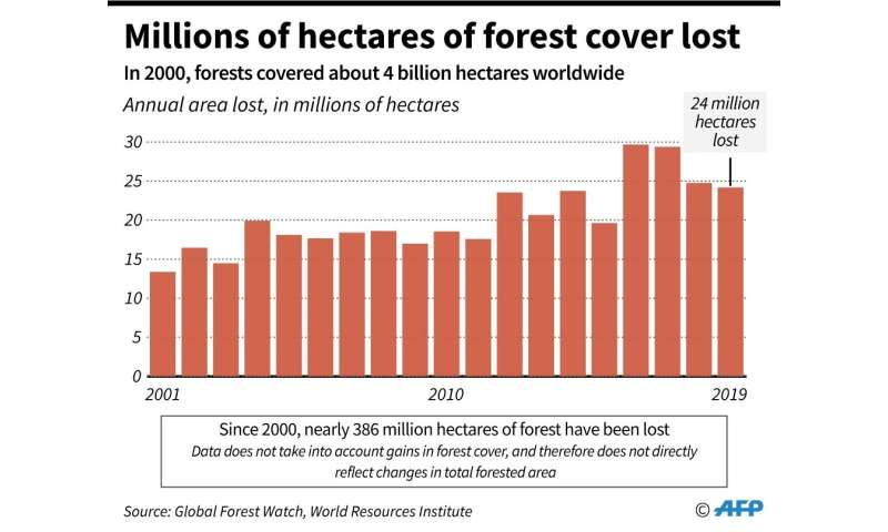 The planet lost 24 million hectares in forest cover in 2019