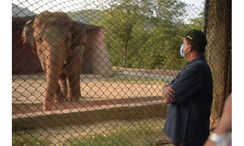 The plight of Kaavan, an overweight, 35-year-old bull elephant has drawn international condemnation