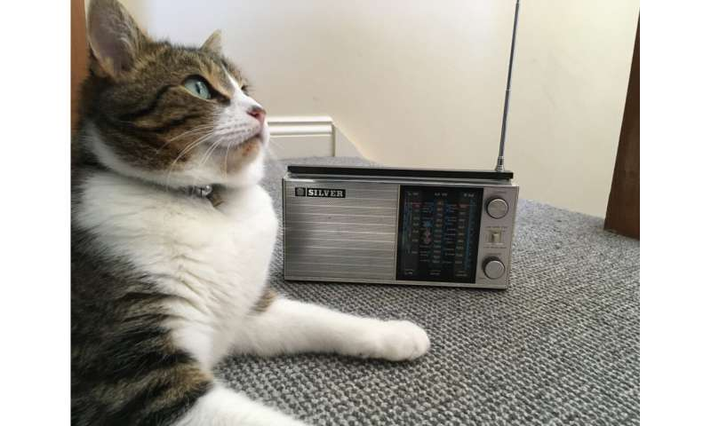 The 'purrfect' music for calming cats