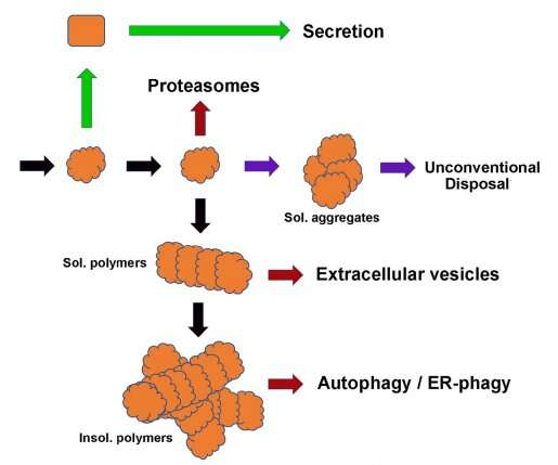 The road to uncovering a novel mechanism for disposing of misfolded proteins