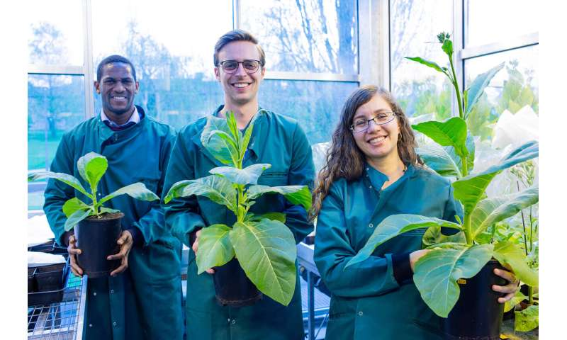 Third breakthrough demonstrates photosynthetic hacks can boost yield, conserve water