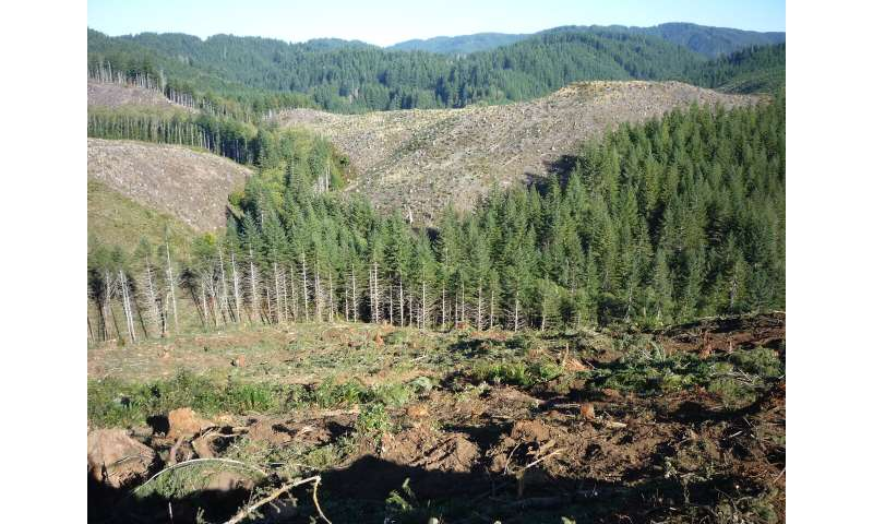Timber harvesting results in persistent deficits in summer streamflow