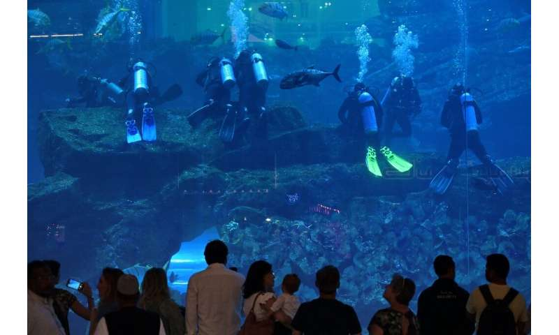 Tourists and locals weeks ago at the Dubai Mall aquarium in downtown Dubai