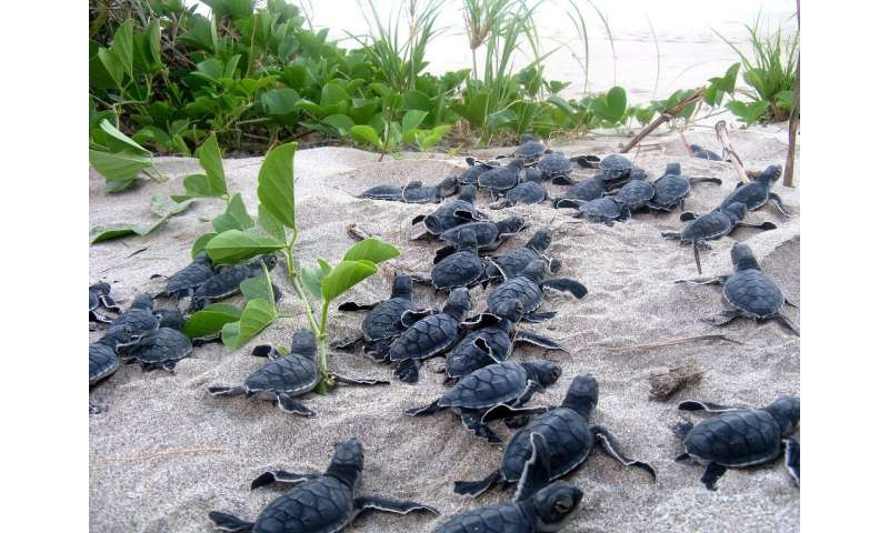 Tracking sea turtle egg traffickers with GPS-enabled decoy eggs